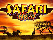 Игра Safari Heat на деньги